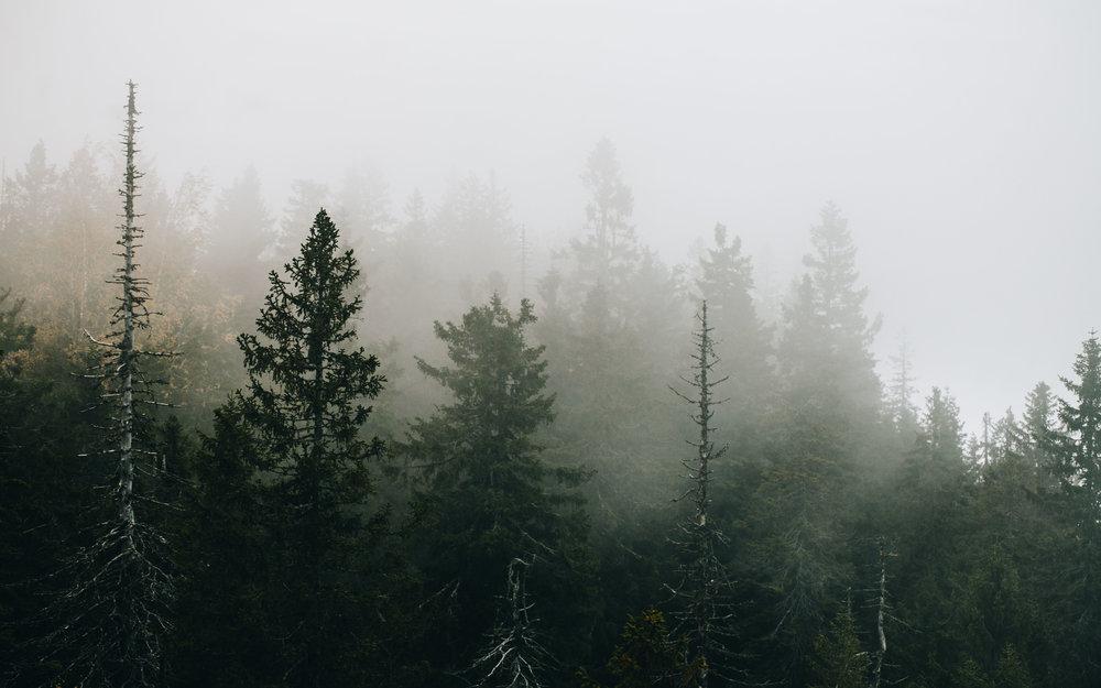 04-koli-national-park-finland-fog-anna-elina-lahti-photographer.jpg