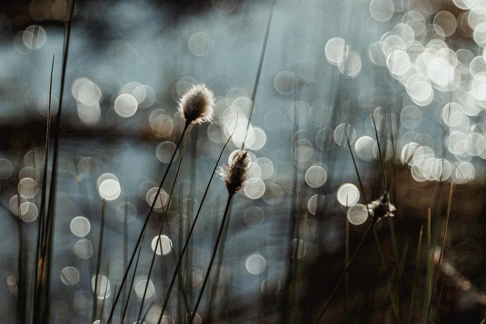 14-finland-eriophroum-cotton-grass-bokeh-anna-elina-lahti-photographer.jpg