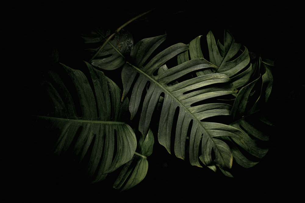15-moody-green-kew-garden-anna-elina-lahti-photographer.jpg