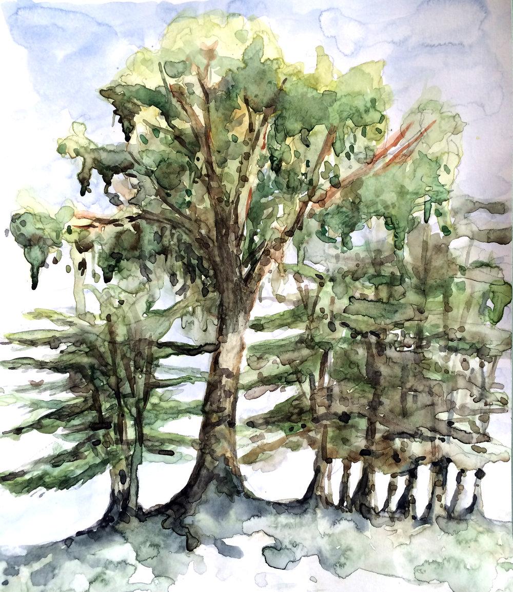 Watercolor: Wai Yee