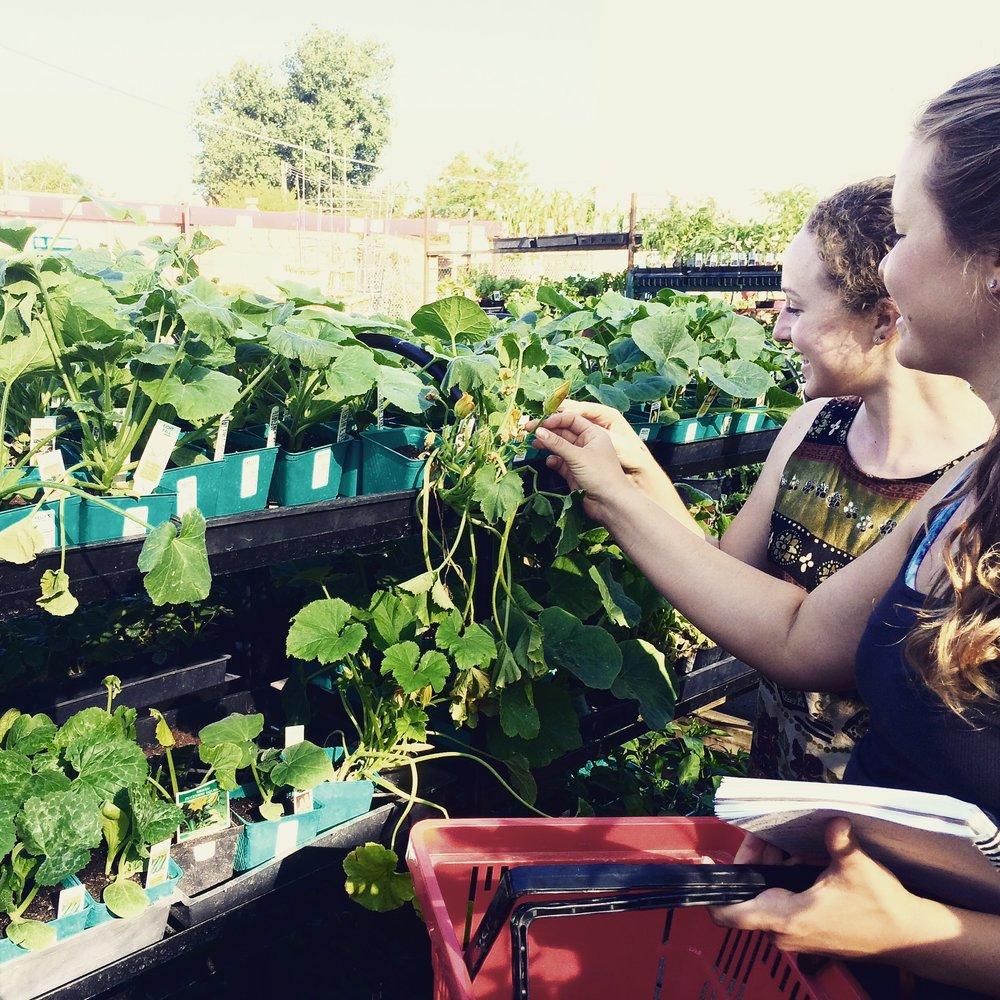 Plant shopping with the garden crew.