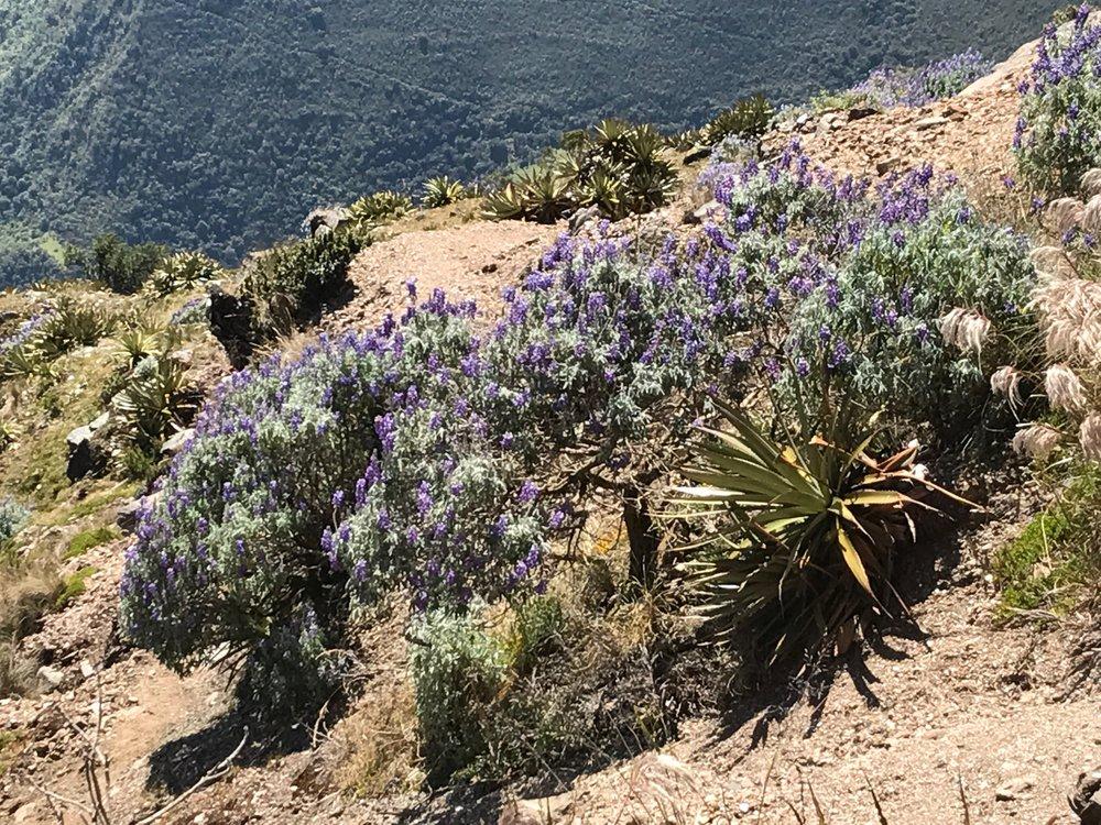 Love the purple flowers!