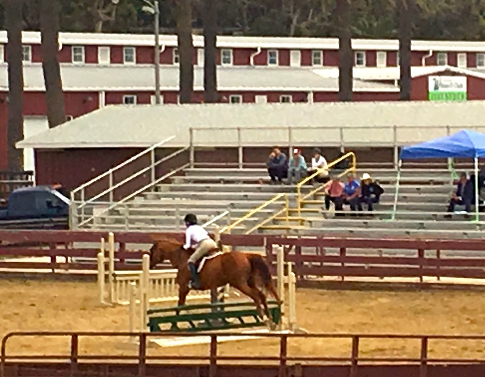 A Jumper proceeding through the gates at the Ventura County Fiar Youth Horse Show. the show was held July 14, 15, and 16. The show included a series of classes from jumping, to OBSTACLE and trail courses to pleasure classes.
