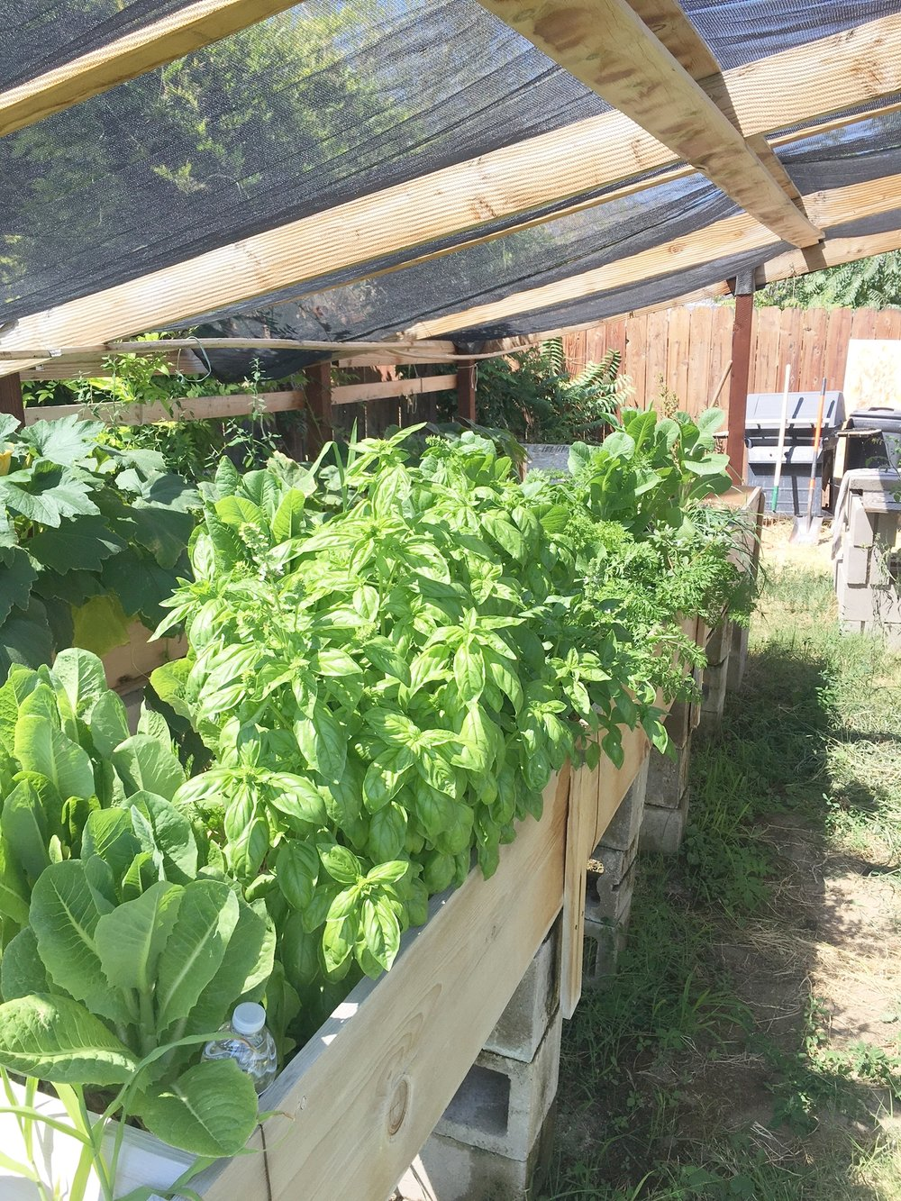 Basil, lettuce, leeks and carrots in my garden. Thankfully I'm past the point where my winter meals depend on harvesting and preserving everything the garden has to offer during the summer. It feels good to work the earth and watch as the seeds sprout and develop. Nothing compares with tomatoes, cucumbers and melons fresh from the garden directly to the table. No grocery store produce counter can offer the same quality and flavor.