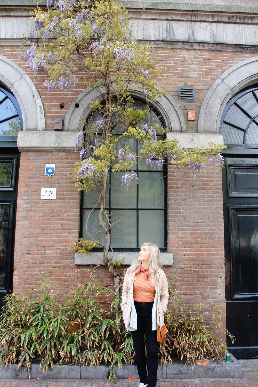 Amsterdam Wisteria.jpg