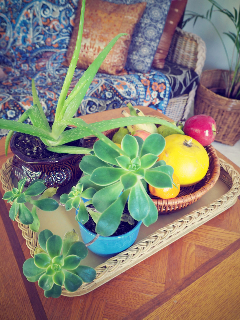 home styling with succulents and baskets