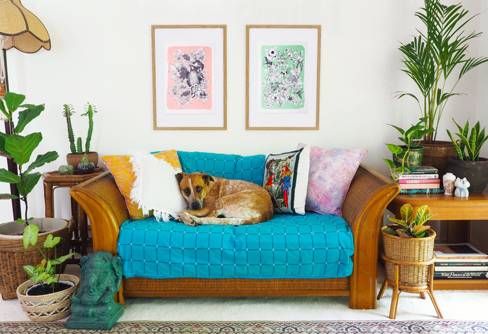 New-loungeroom-boho-dog-on-sofa