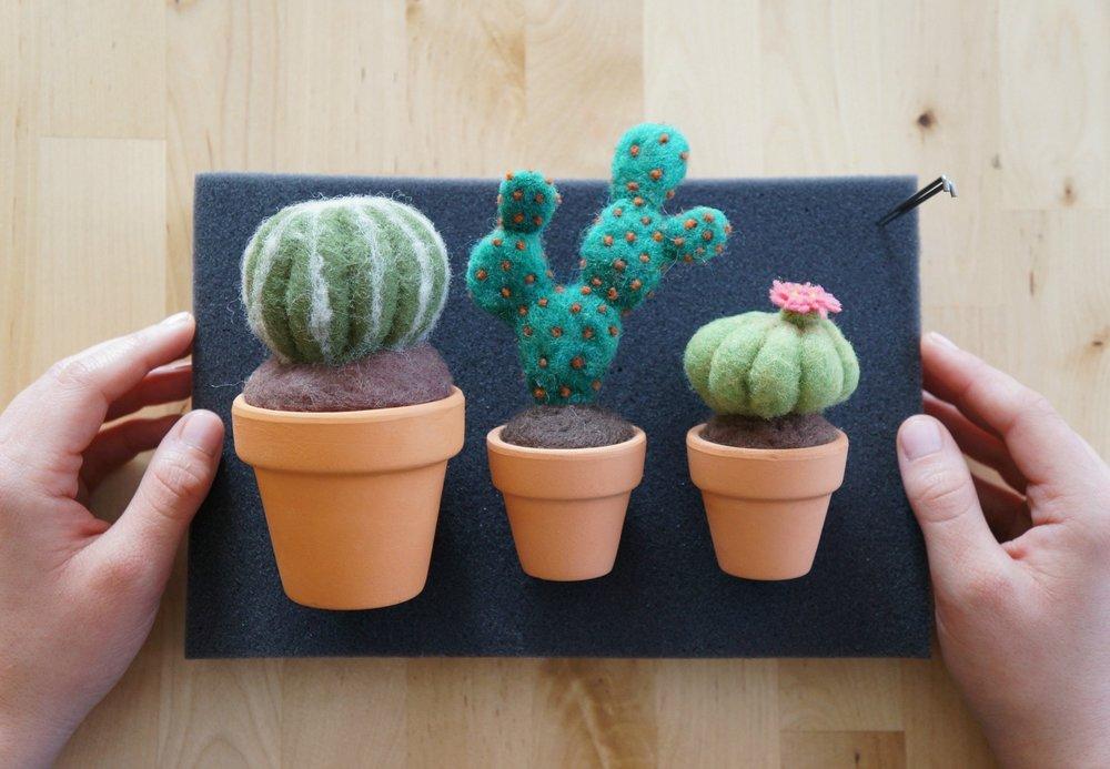 cactus 001.jpg