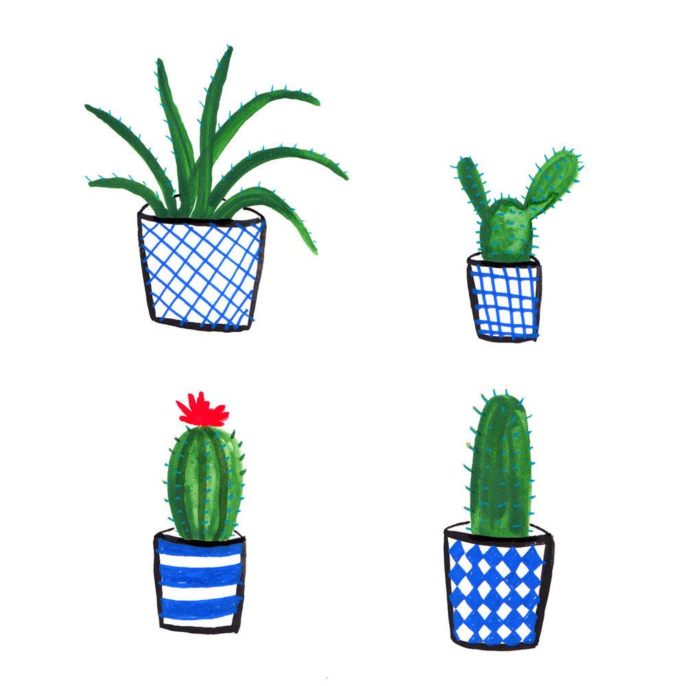 house plants .jpg