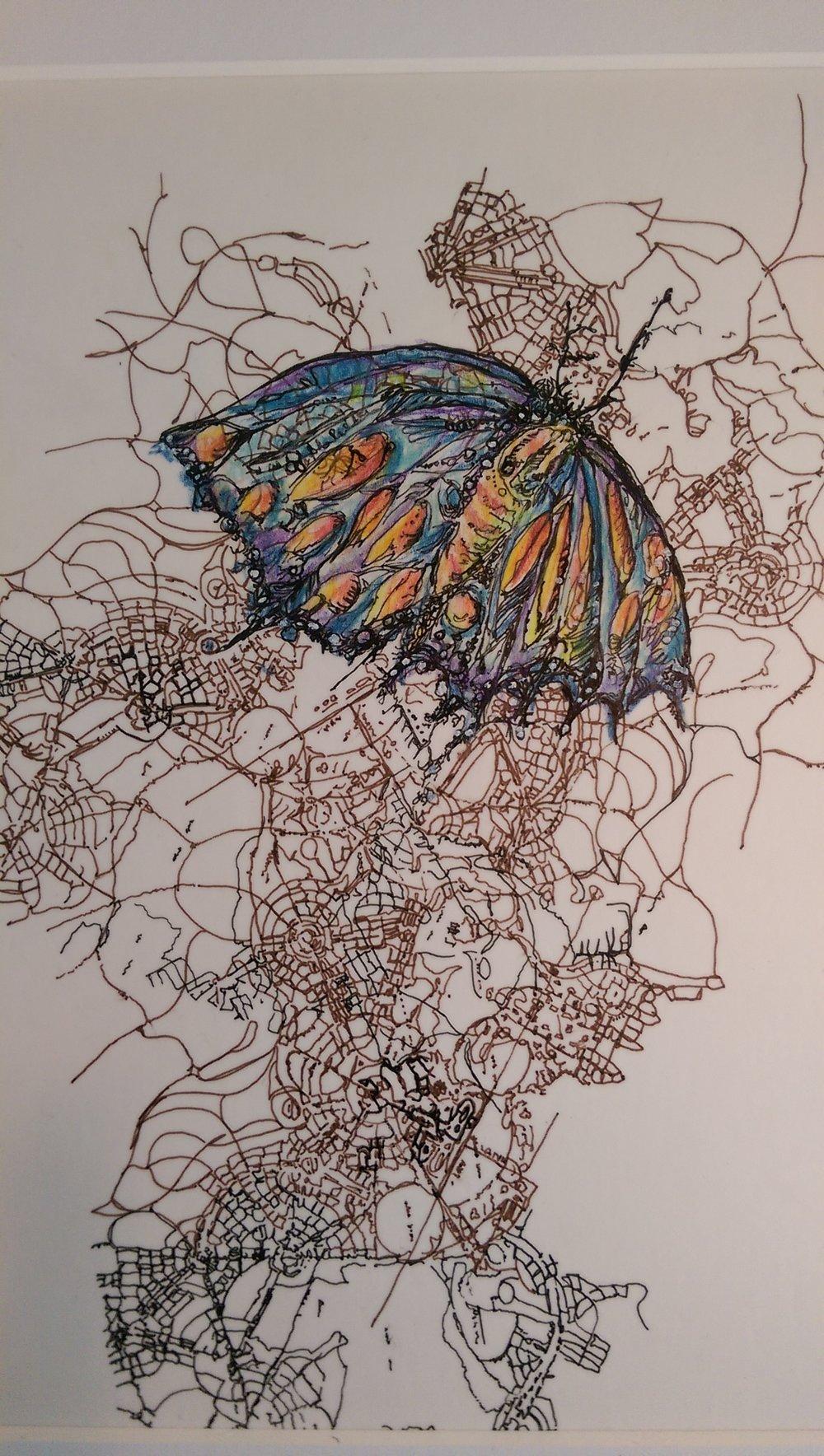 moth over camebera australia.jpg
