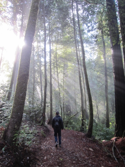 Tall Tree Trail_Sunlight.JPG