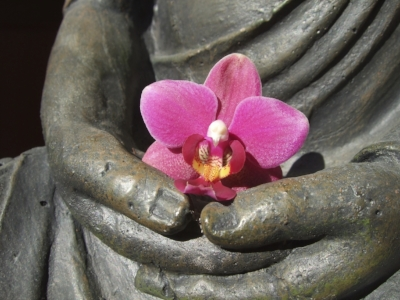 buddha pink flower.JPG