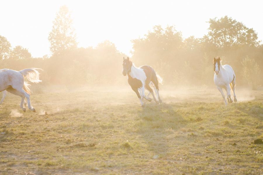 Horse-Ranch-Engagement_06.jpg