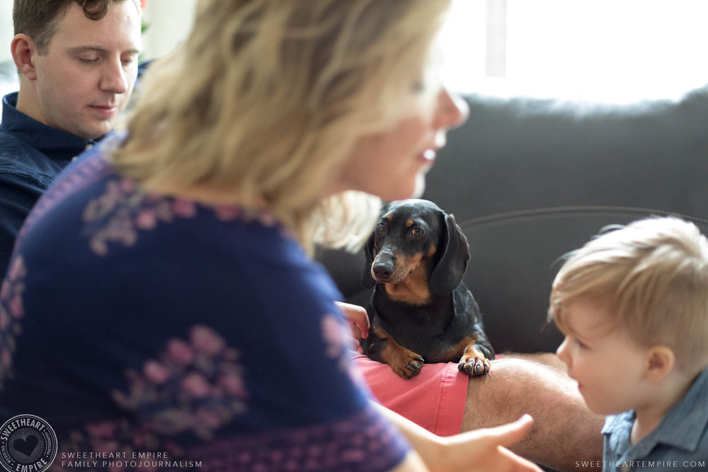 19_Miniature dachshun looks on while mom picks up son.jpg