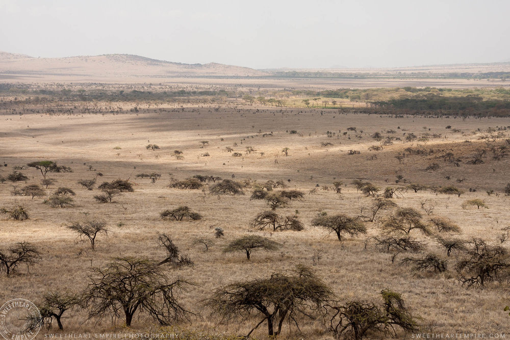 6-Lewa Wildlife Conservancy in Kenya.jpg