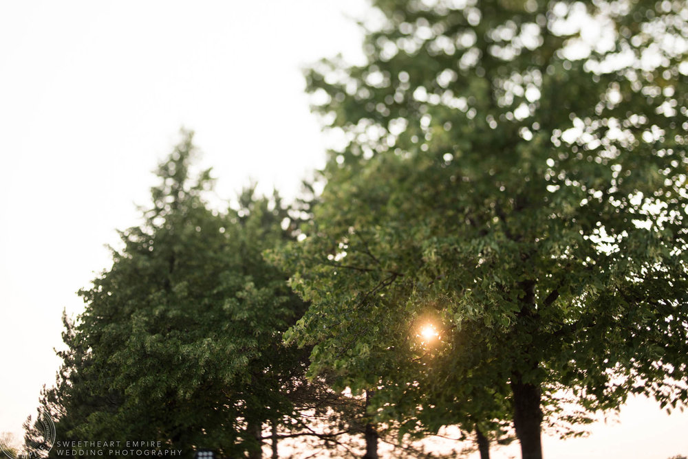 The sun shining through the trees, Rockway Vineyard Wedding, Niagara