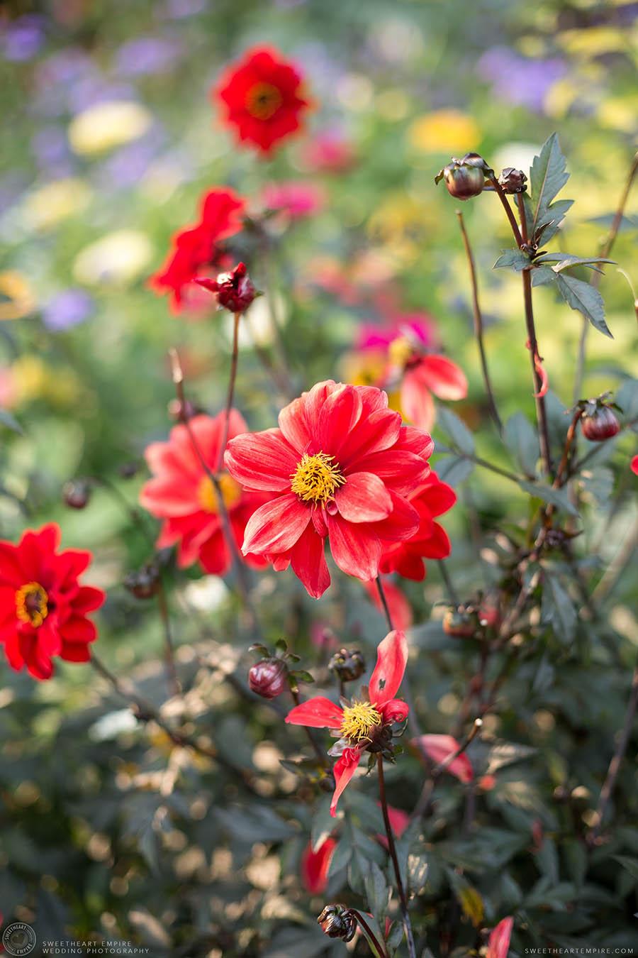 03_Kew Gardens Engagement.jpg