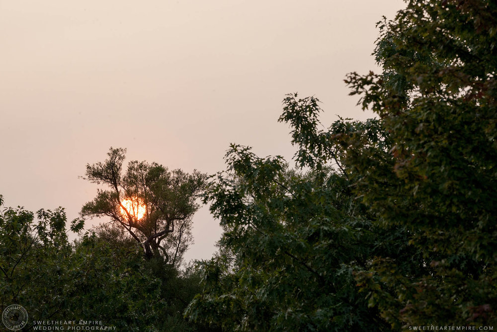 Sunset through the trees, Engagement Photos at Kew Gardens