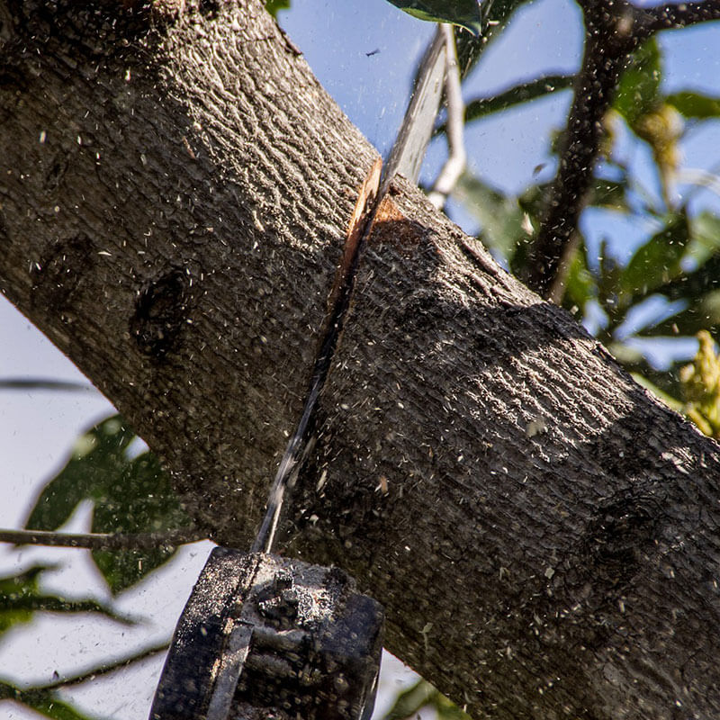 Tree Removal Service - Nelson, Richmond & Tasman