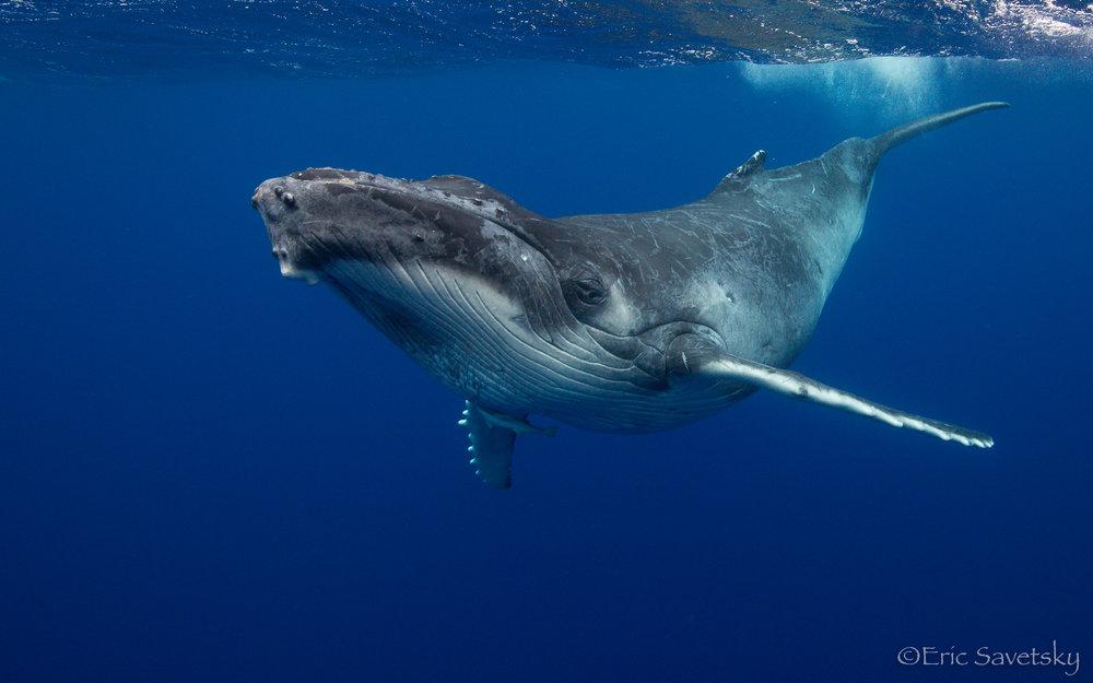 HB_Whale arch-2.jpg