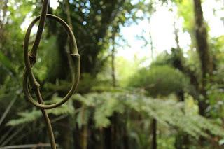 A supplejack knot