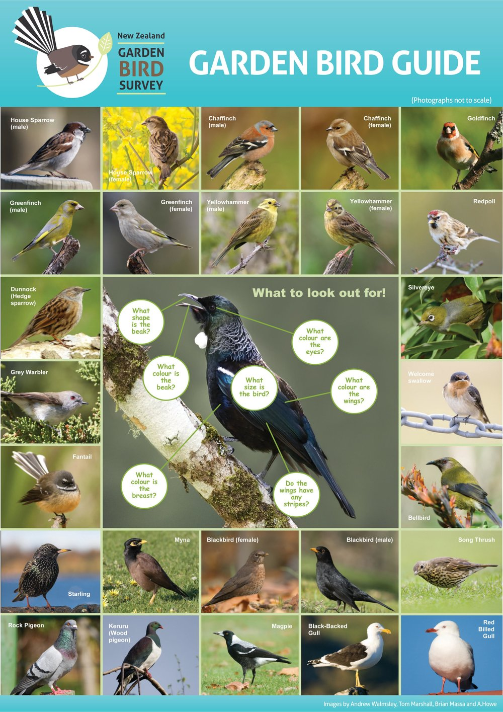 garden-bird-survey-guide (1)-page-001.jpg