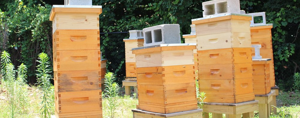 BEEKEEPING - We are a certified Mann Lake dealer with ten hives on the property & honey for sale.In addition, we also offer beekeeping classes & have everything you need to start and build your own hives.If you're interested in beekeeping, check out our workshops schedule and/or if you're interested in having hives installed at your residence or business contact our Landscape Design department.