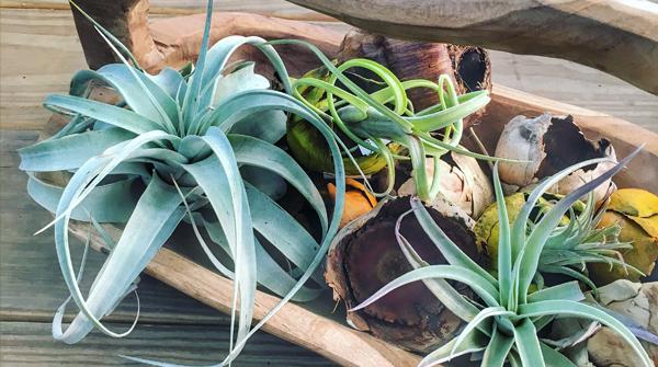 succulent bowl.png