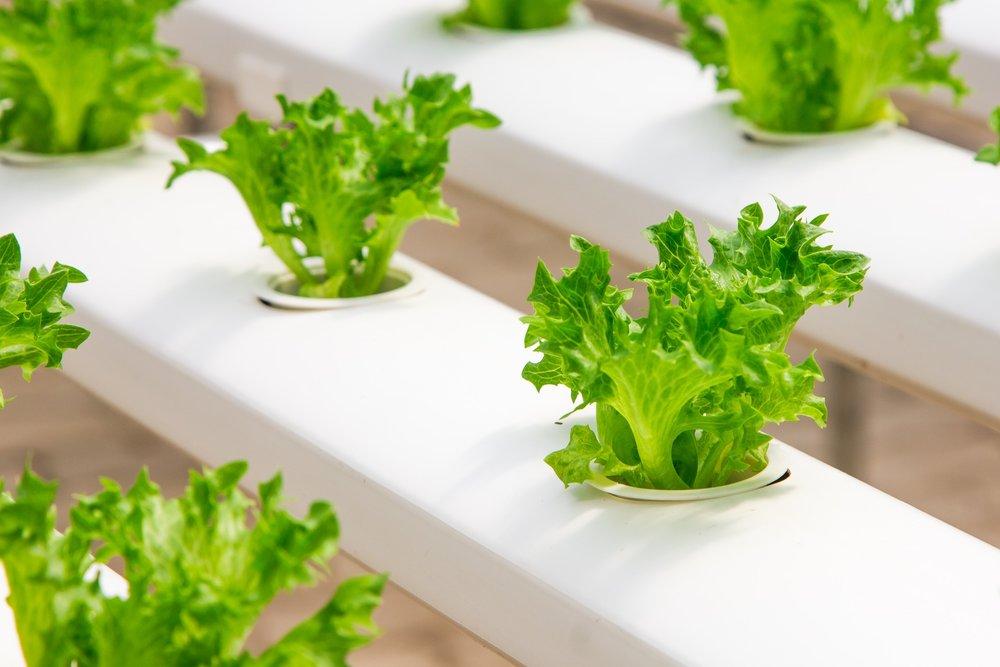 1 hydroponics.jpg