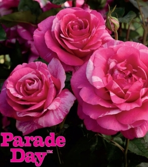 parade-day-1024x608.jpg