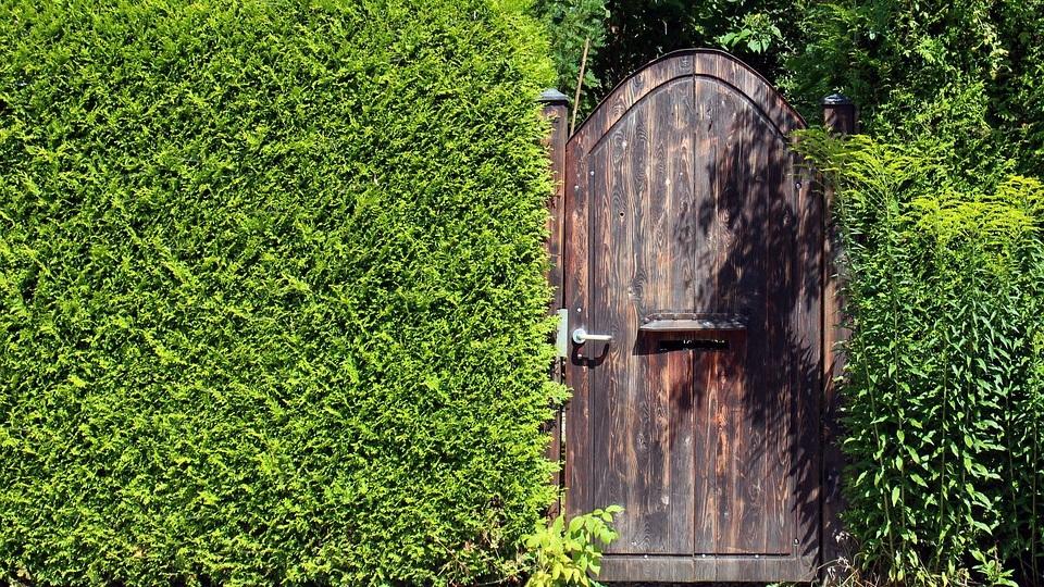 Create a Living Privacy Screen -