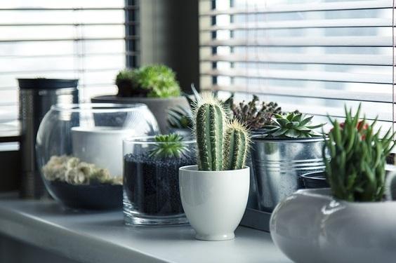 No-Fuss Houseplants -