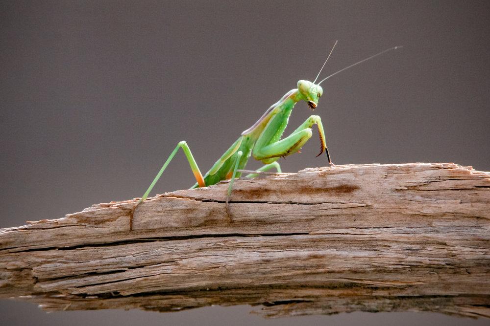grasshopper flikr.jpg