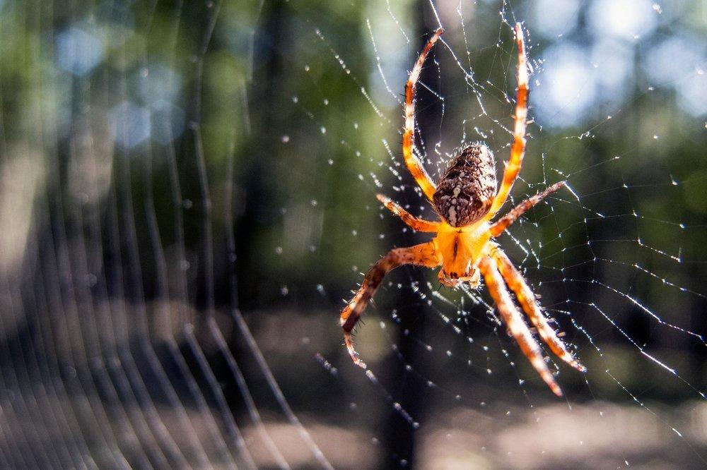 spider libreshot.jpg