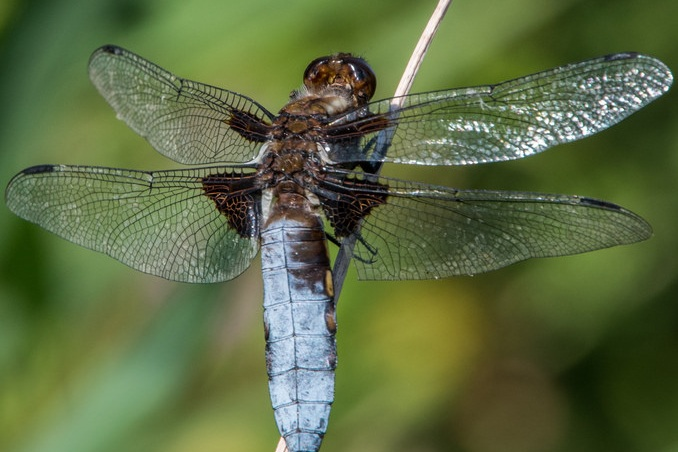 dragonfly+flickr.jpg