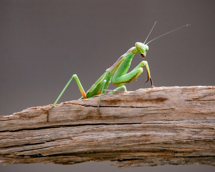 Beneficial Insects - Chemical pesticides don't only wipe out the bad bugs, they kill the beneficial insects as well. This is bad news for the long-term maintenance of your garden as there won't be a population of natural predators to feed on these pests.