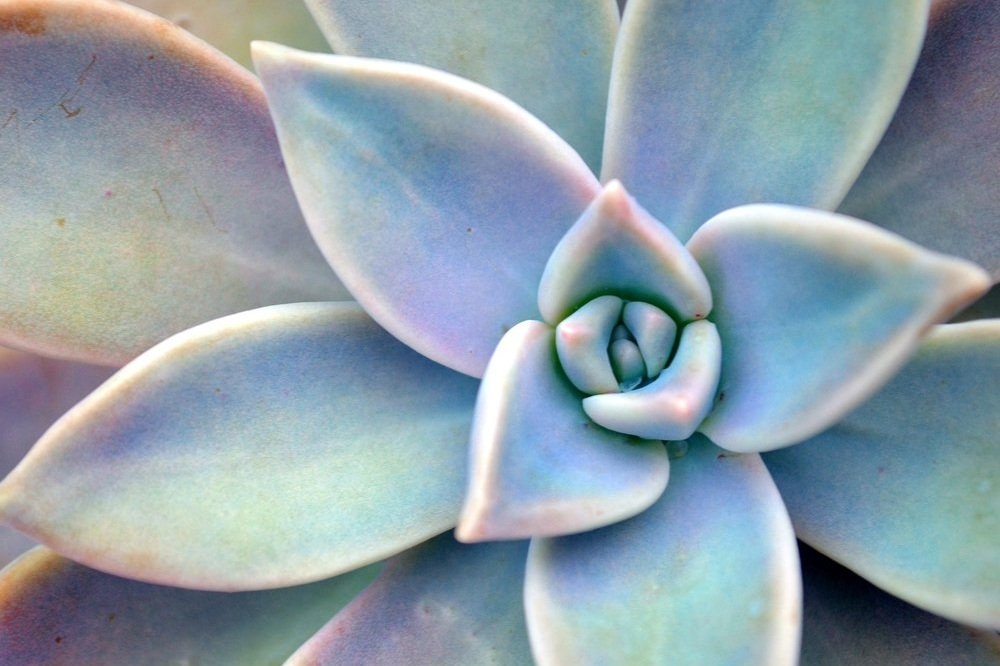 What's Wrong with My Succulent? - Do you love succulents but struggle to keep them alive?