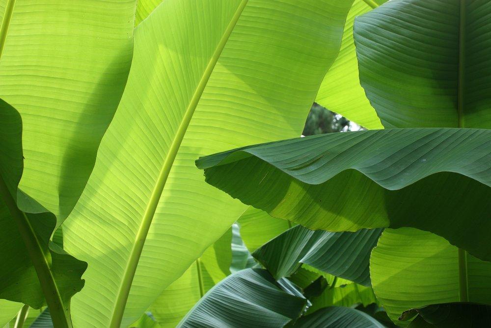 banana pixabay.jpg