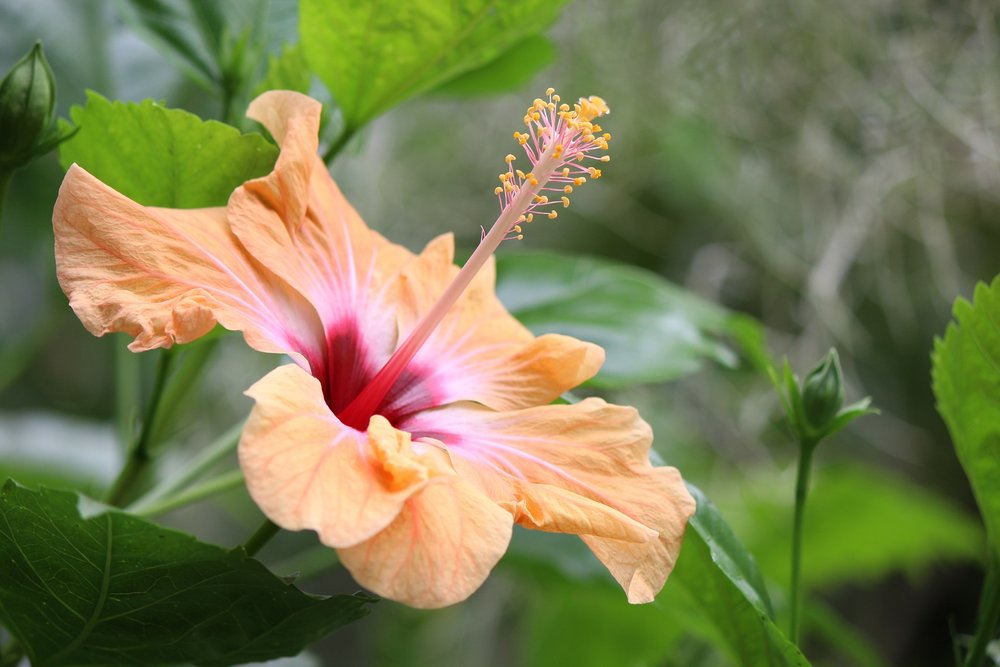 Tropical Patio Plants - Transform your patio into a lush paradise with heat-loving tropicals in containers.