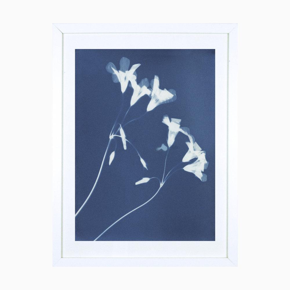 Love Plant.jpg