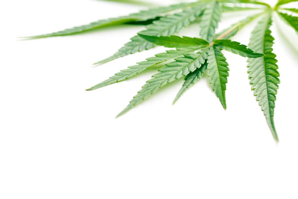 Cannabis General.jpeg