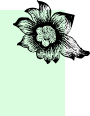 flower-contact-2.png