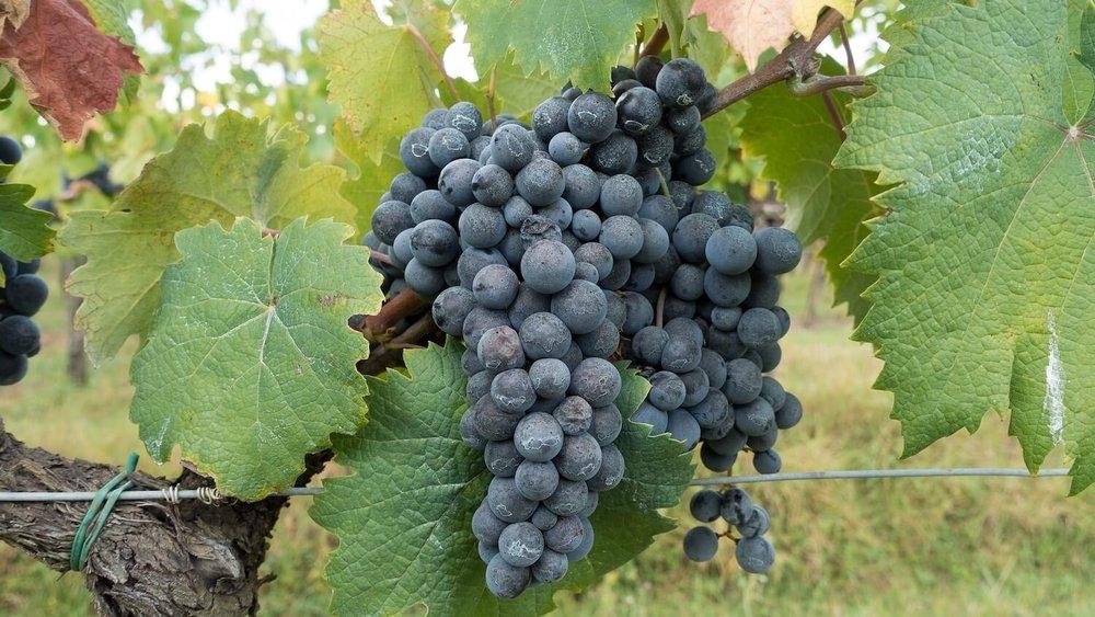 degustation-vins-biologiques-blagnac.jpg