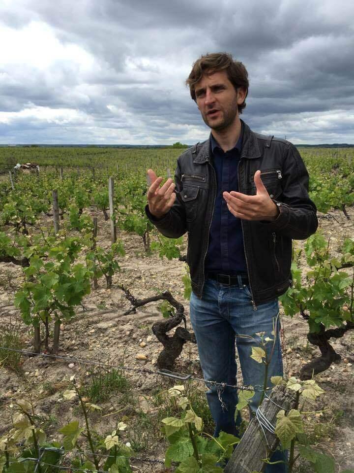 Dans les vignes de Sauternes.jpg