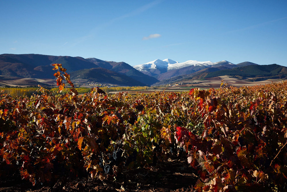 Los paisajes de la rioja que dan car cter al vino james for Alojamiento en la rioja espana