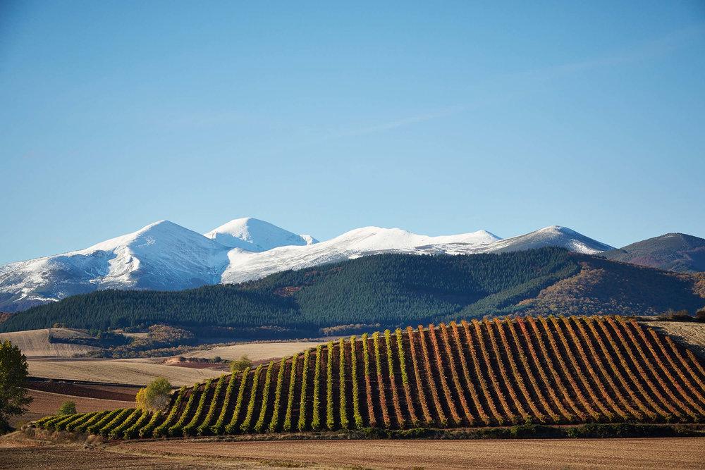 Paisaje viñedos en La Rioja Espana por James Sturcke