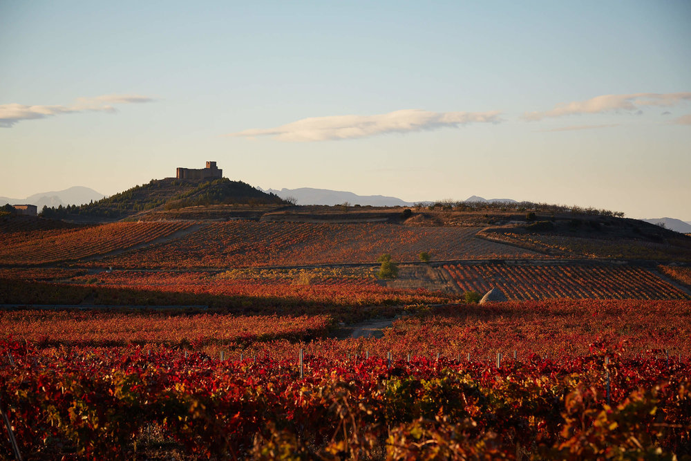 Wine Scenery Landscape La Rioja Spain by James Sturcke