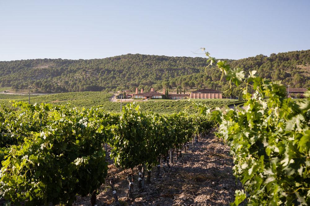 Wine photography in Ribera del Duero (Valladolid) Bodegas Viña Major - James Sturcke | sturcke.org