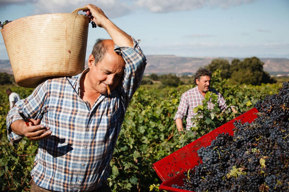 Mejor Fotografia Comercial y Editorial La Rioja y Pais Vasco Espana - James Sturcke - sturcke.org_022.jpg