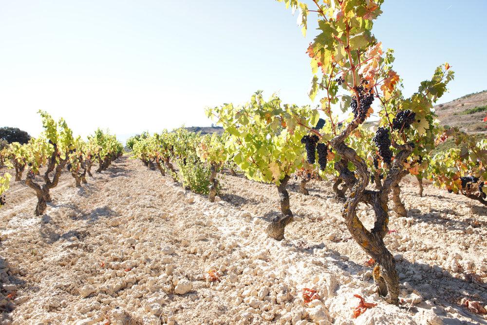 Fotografía comercial La Rioja y Pais Vasco Espana - James Sturcke | sturcke.org_043.jpg